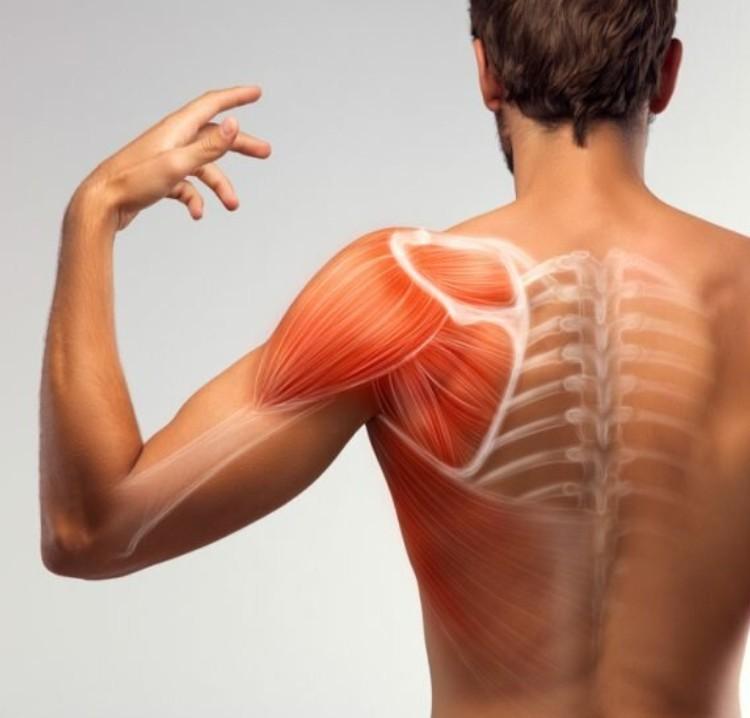 omuz ve dirsek hastalıkları